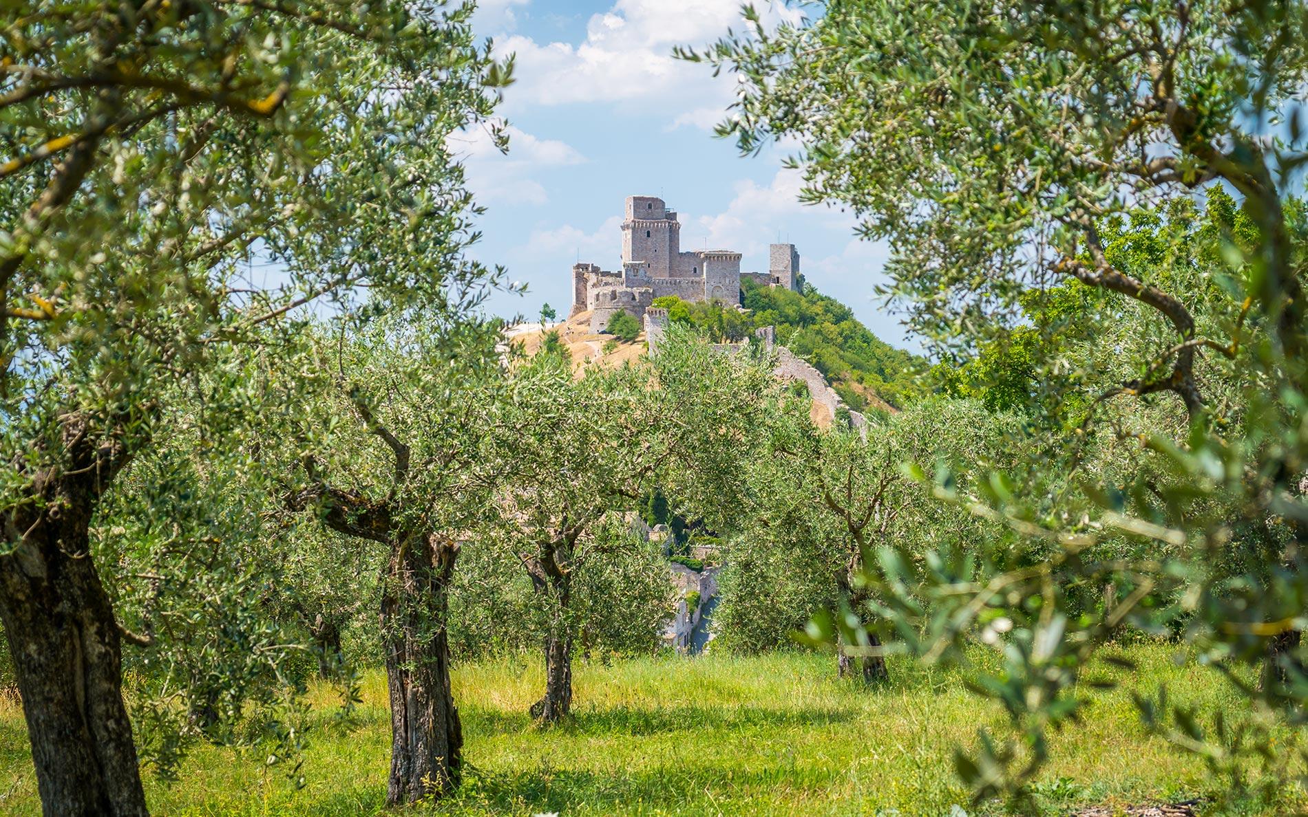 Artigianato e Oggetti in legno di olivo Assisi